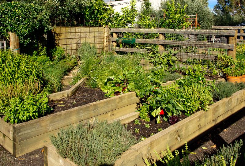 Toms Cap veg garden