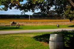 Balgowriewinery2