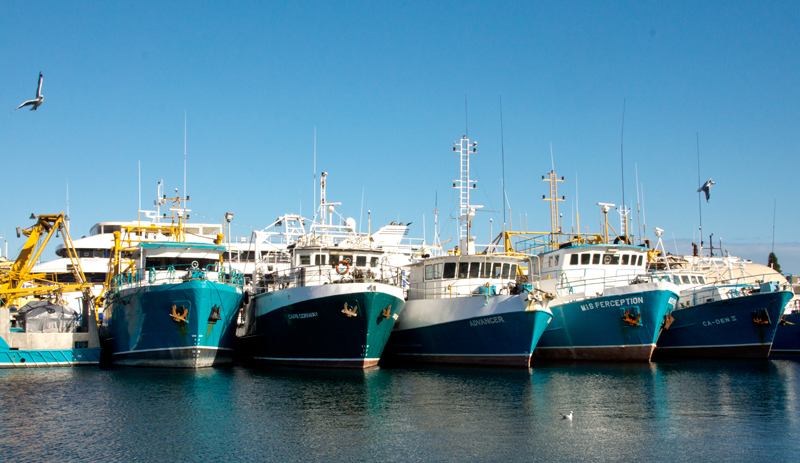 Fremantle trawlers