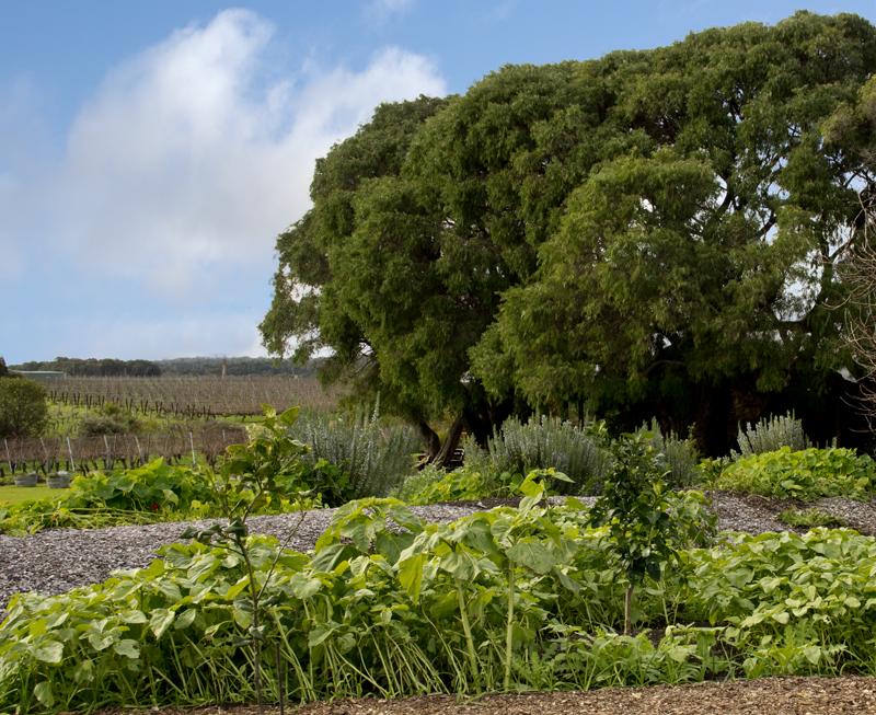 Cullen Wines organic garden