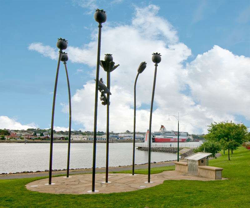 Bronze poppies Devonport