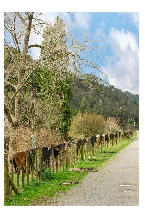 Goat Skin Fence