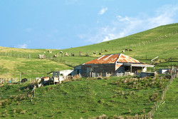 Raglan farm scene
