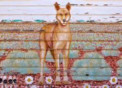 The Cook Dingo
