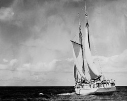 Tiare Taporo out of Auckland
