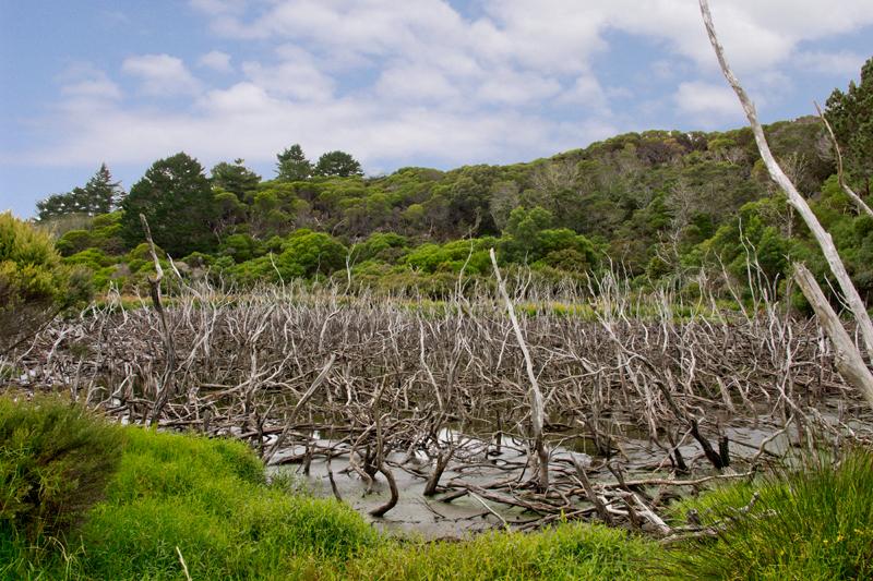 dead lake Kai-iwi Lakes