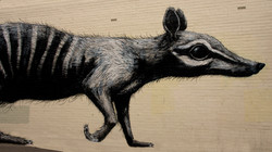 The Fremantle Rat Fremantle