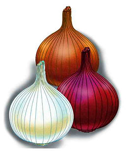 Hybrid onions