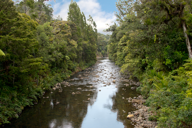 Waipoua Stream, Waipoua Forest,