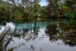 Waikoropupu Springs 3