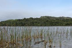Kaihoka Lake, South Is NZ