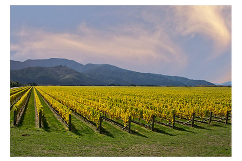 Rarangi vines