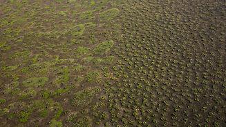 Termiteria.jpg