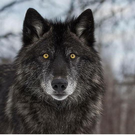 Danger (feat. Black Wolf)