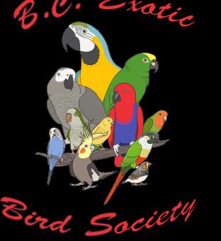 Meet Parrots at Their Best