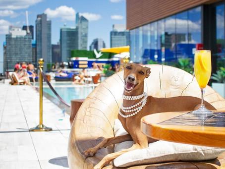 Meet Supermodel Dog Iggy Joey