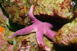 Une étoile de mer club léo lagrange camaret sur mer