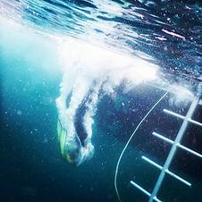Niveau 1 Plongée Camaret sur Mer Club Léo Lagrange