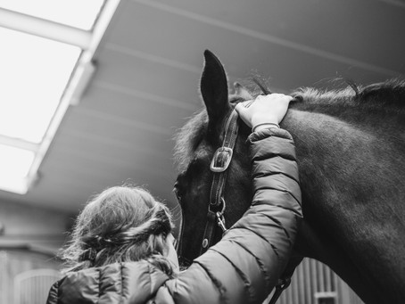 Does my horse need a physiotherapist?