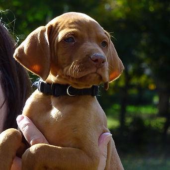 Beautiful healthy pup
