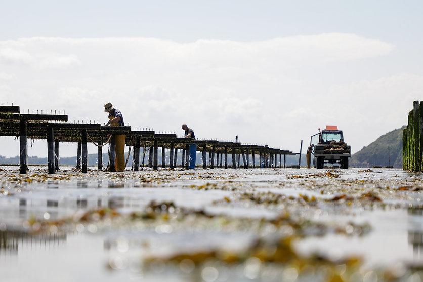 conchyliculteur / reportage / marins / bretagne / fruits de mer