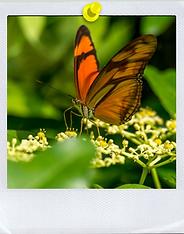 Papillon prenant son envol