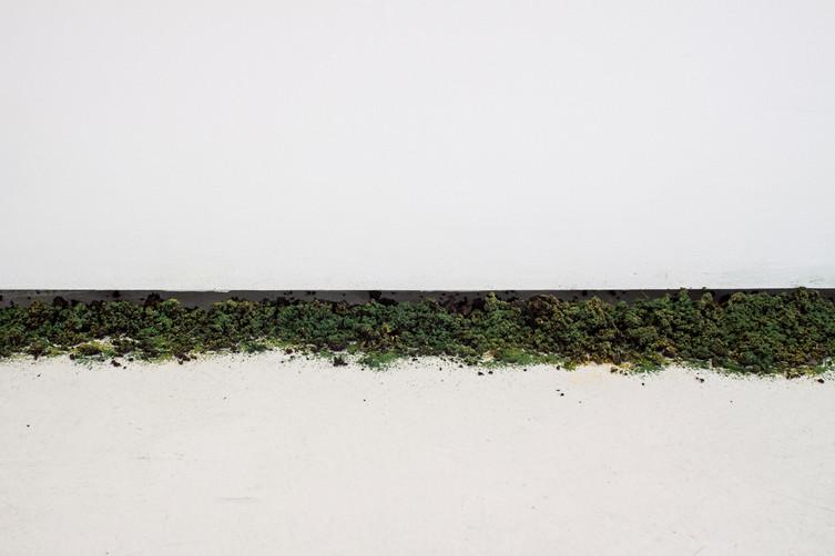 Reminiscencia vegetal. Site specific piece. Variable measures.
