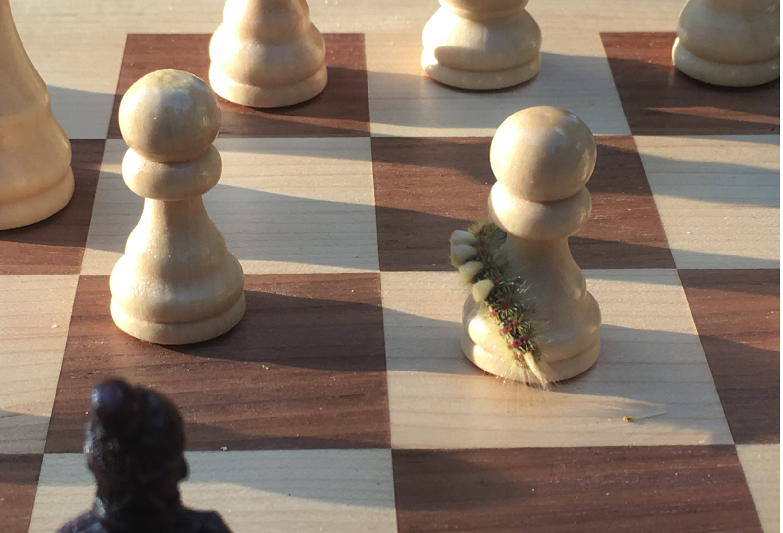 Caterpillar chess.png