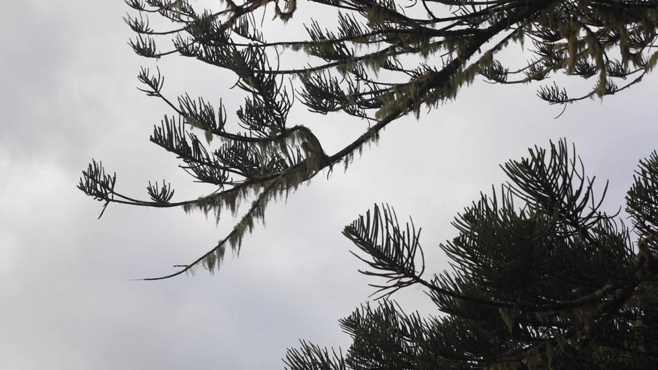 Still lichen.jpg