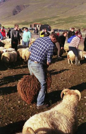 3 Farmer wrangles one of his sheep.JPG