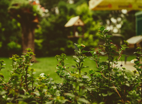 7 Landscaping Tips to Make Your Yard Beautiful