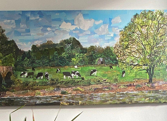 Cows In Field Picture