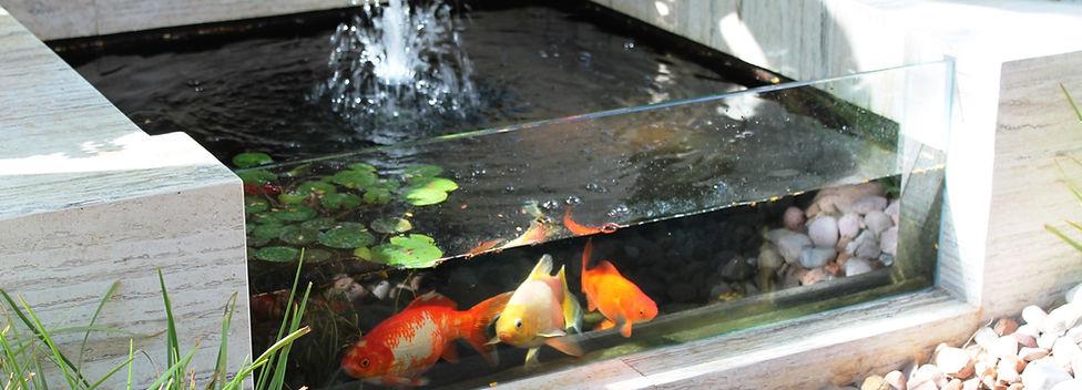pond glass
