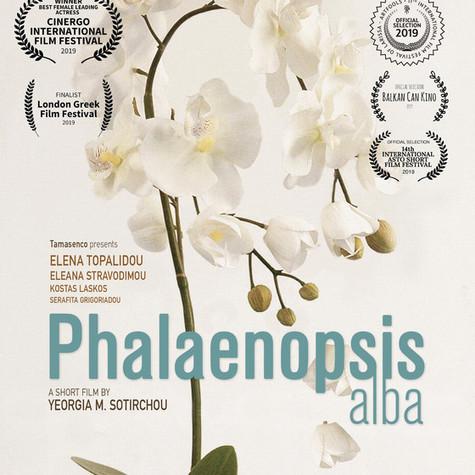 Phalaenopsis alba