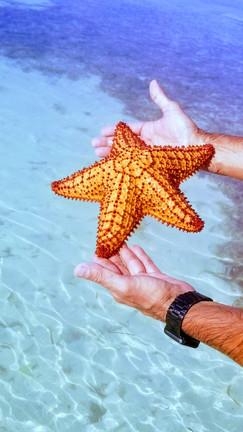 Starfish in Bahia Honda Key
