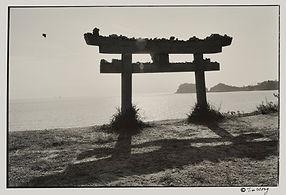 Bird flies over torii