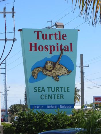 Marathon Turtle Hospital