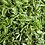 Thumbnail: GREEN TEA