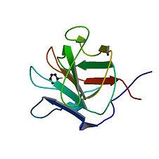 gene coagulation Factor V.jpg