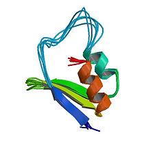 gene FMR1.jpg