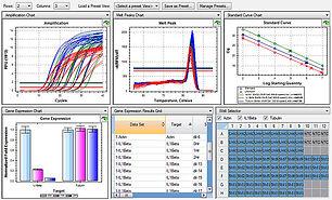 q PCR analise.jpg