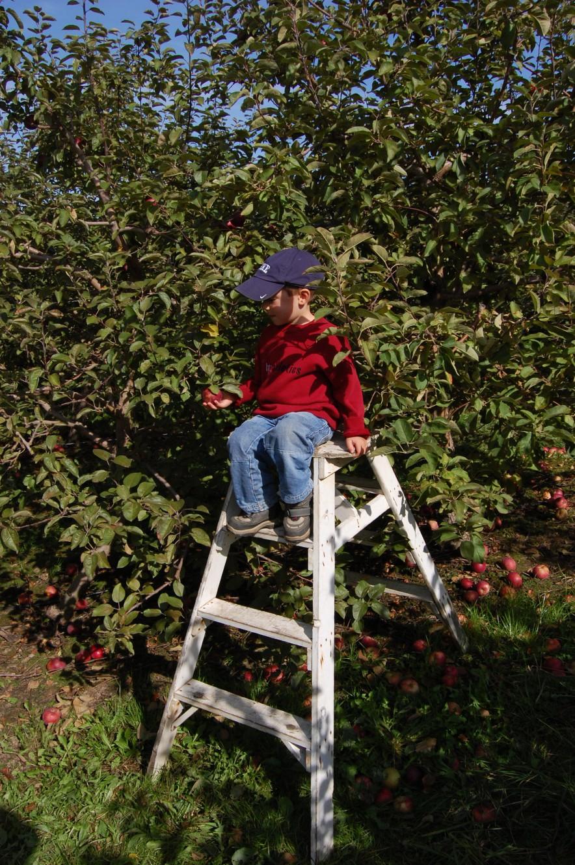 Autocueillette de pommes au Verger La Pommalbonne de Compton