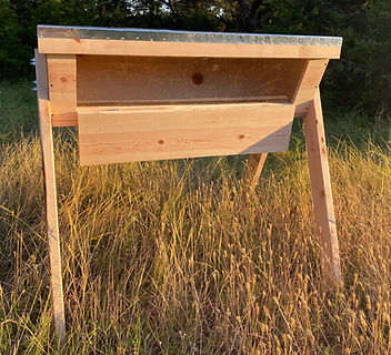 Bee Hive 3.JPG