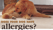 How do I Determine if my Dog has Food Allergies?