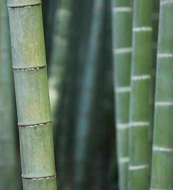 green-bamboo-macro_edited.jpg