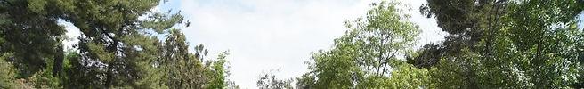 Eagle Rock Dog Park (4).jpg