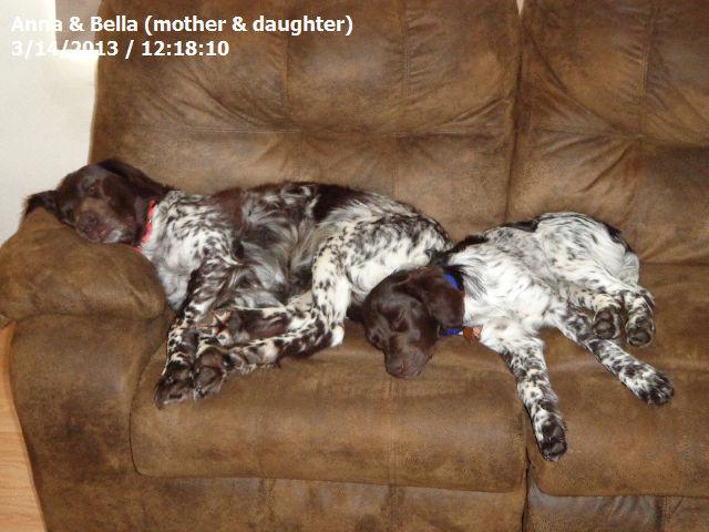 Yetta's Dam, Bella and her daughter...