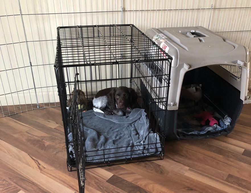 Aster's favorite crate.