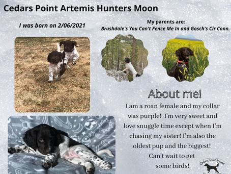 Cedars Point A Litter Space Pups!