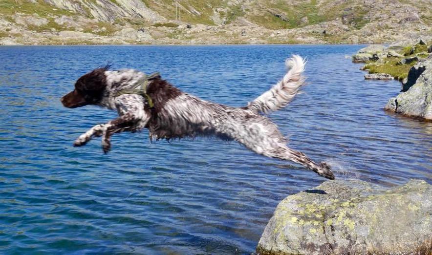Pixer Jixer launching into the water....